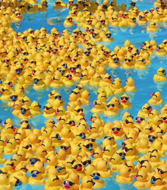 Rubber Ducky Race Image